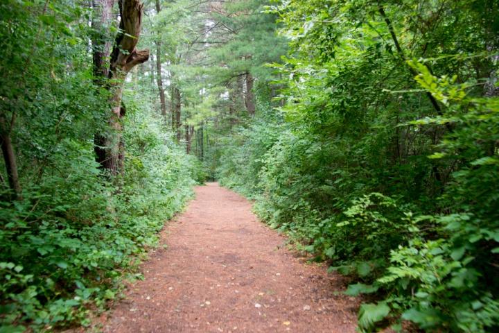 EL Johnson Nature center.jpg